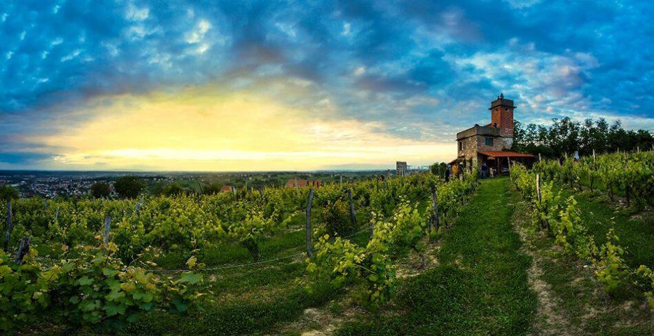 Daruvarska vinska cesta -Vezmarova kula, foto Damir Bakarić